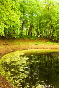 summer landscape: lake in the forest